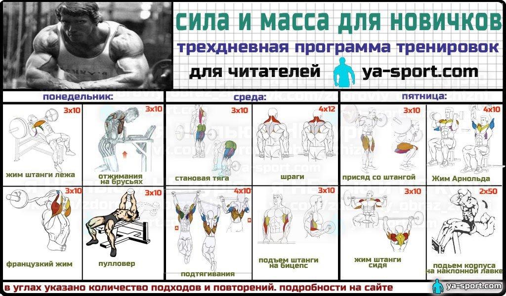 программа тренировок для начинающих для похудения