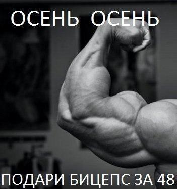 бицепс 48 см