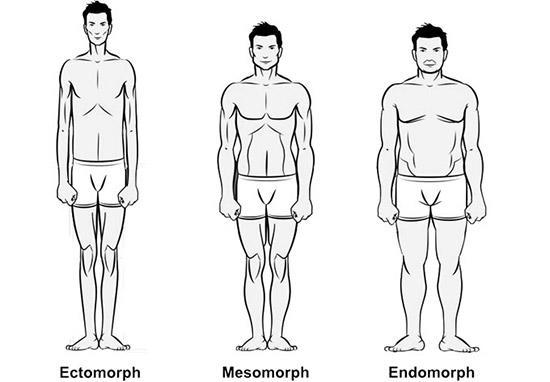 эктоморф, мезоморф и эндоморф