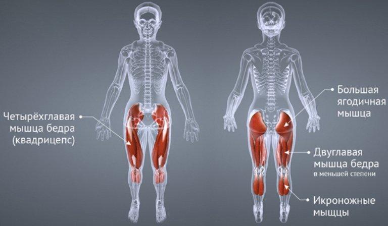 На какие мышцы действует степпер