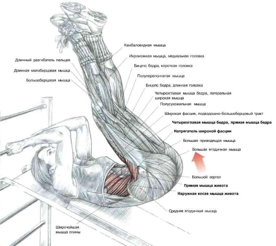 подъем ног на наклонной скамье