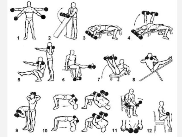 Упражнения с гантелями в домашних условиях картинках
