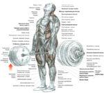 Советы по становой тяге
