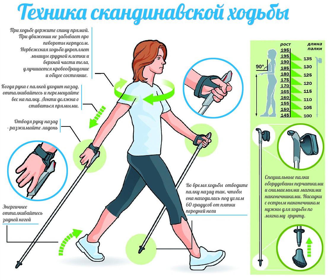 основы техники ходьбы