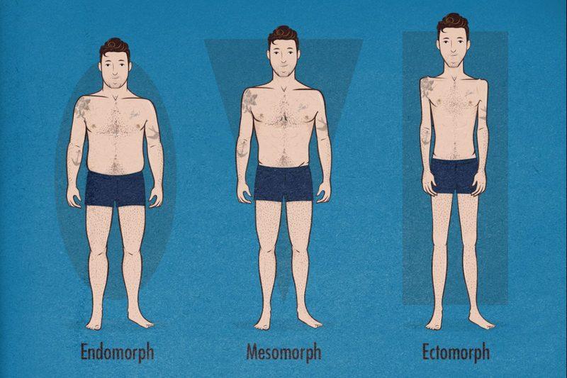 типы телосложений