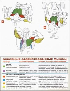 жим гантелей лежа работающие мышцы